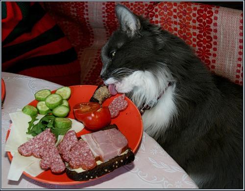 Хороший аппетит (24 фото)