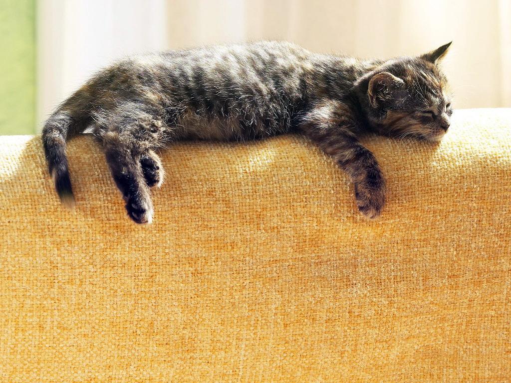Котята лежат фото