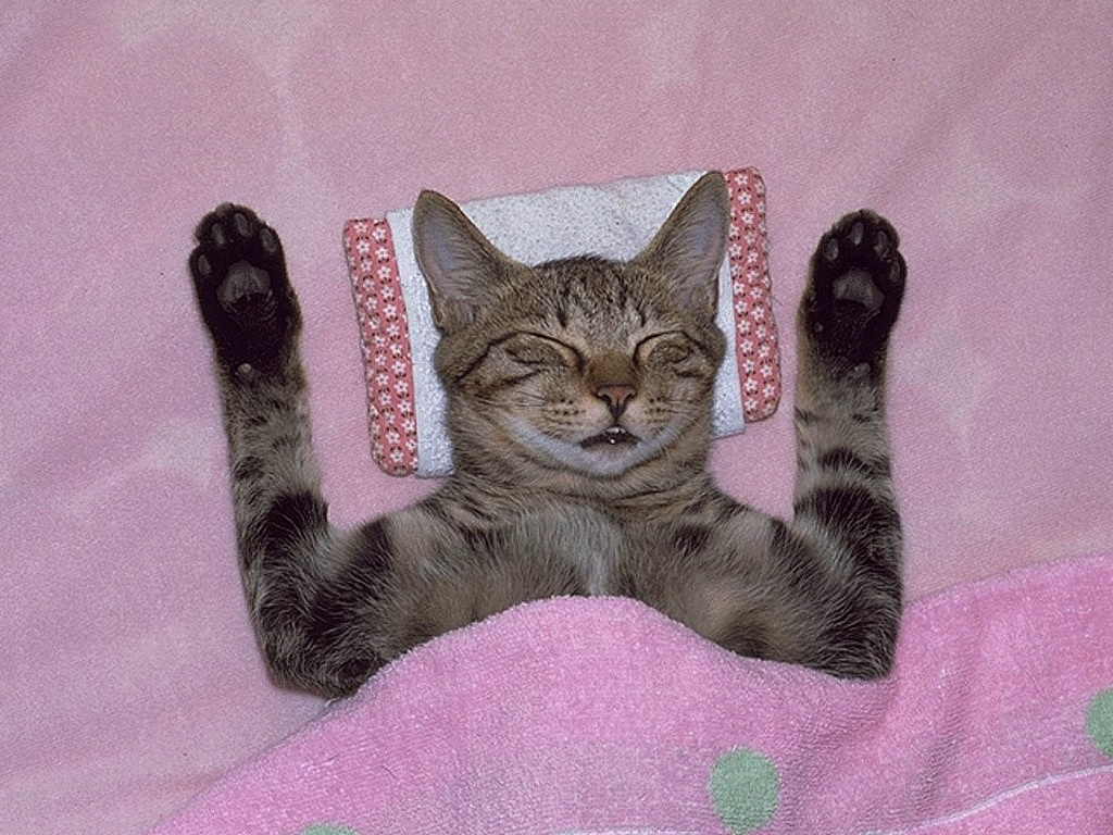 Спокойной ночи кошки картинки приколы