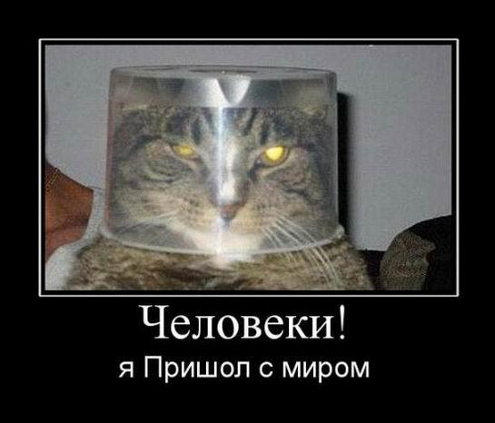 Демотиваторы про животных 20 фото