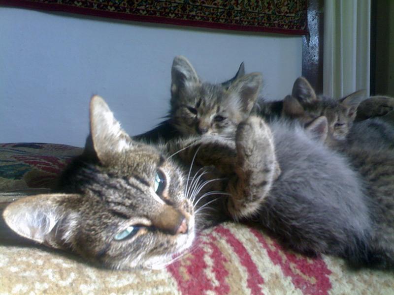 всем как к чему снятся котята и кошка обложка