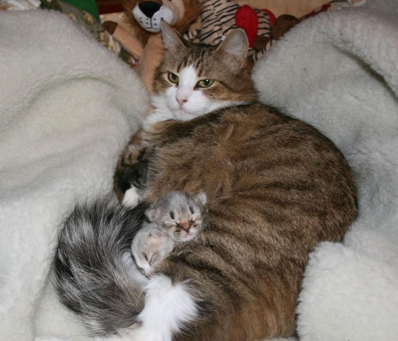 лежаки для кошки с котятами