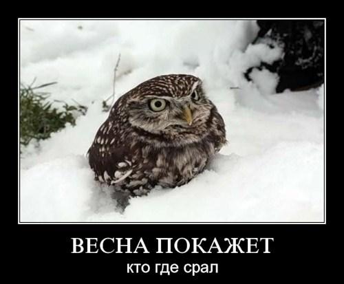 Демотиваторы про животных (19 фото)