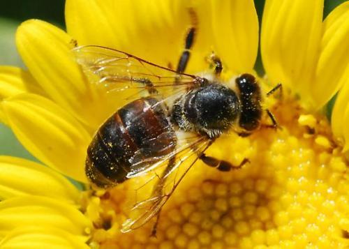 Пчелы на страже порядка