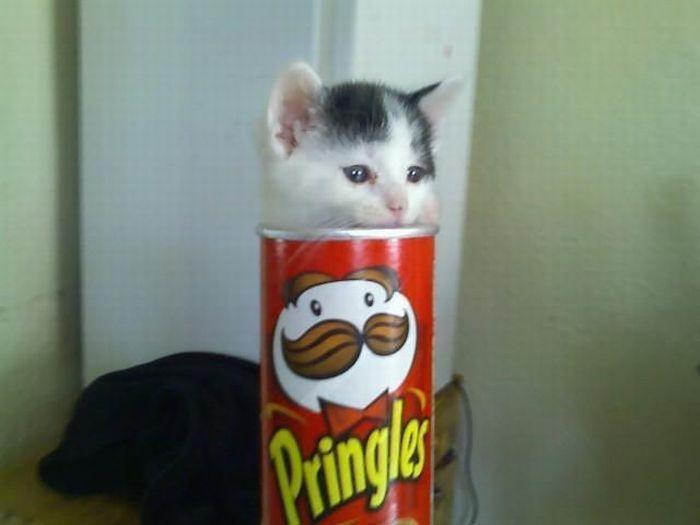 чипсики сухарики картинка с котом мем лабазником