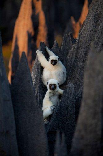 Эти забавные животные (25 фото)