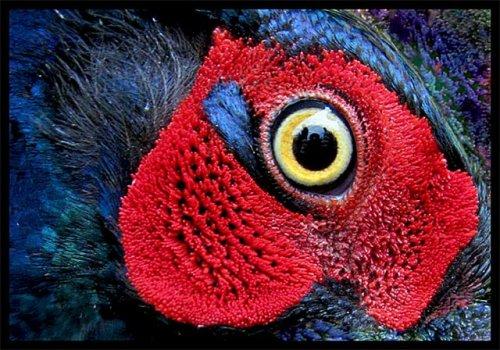 Посмотри в глаза животных (34 фото)
