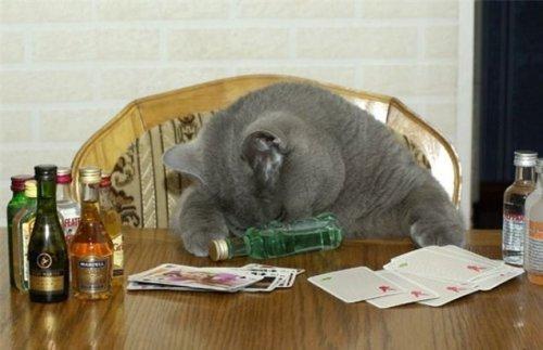Коты и алкоголь (18 фото)