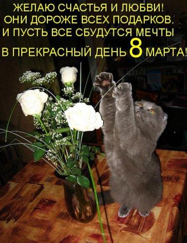 Поздравления от животных с 8 Марта! (38 фото)