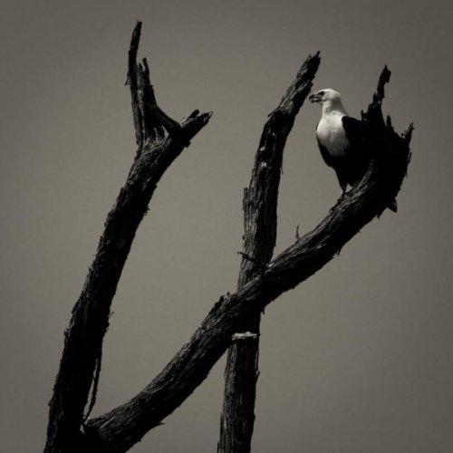 Черно-белые фото (38 фото)