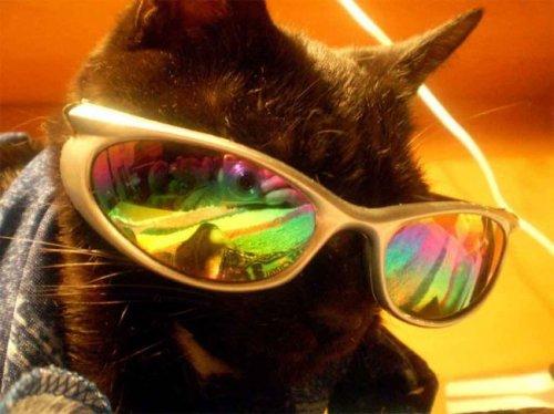 Животные в очках (25 фото)