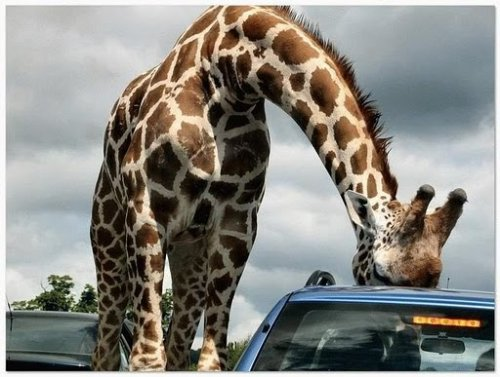 Смешные животные (23 фото)