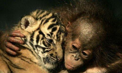 В мире животных (36 фото)