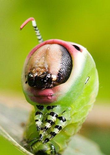 Букашечки- таракашечки (38 фото)
