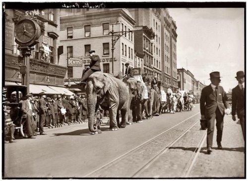 Прогулки с животными 100 лет назад (9 фото)