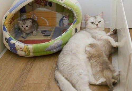 Кошки с котятами (25 фото)