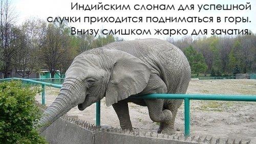 Интересные факты о животных в картинках (19 фото)