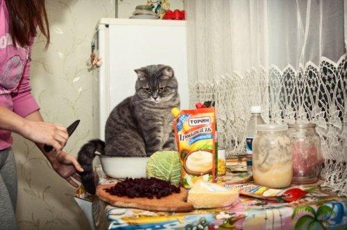 Смешные животные (28 фото)
