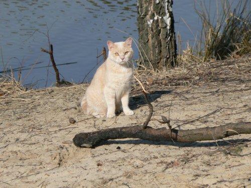 Фотоподборка котов и кошек (30 фото)