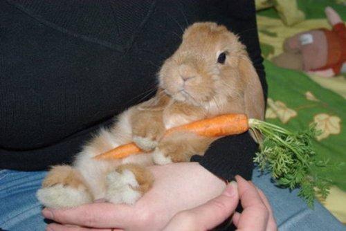 Милые кролики (32 фото)