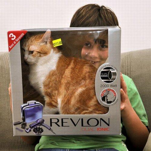 Коты-проныры (29 фото)