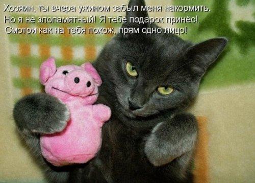 Весёлая котоматрица (33 фото)