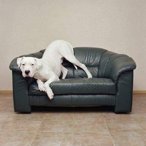 Собаки в интерьере (25 фото)