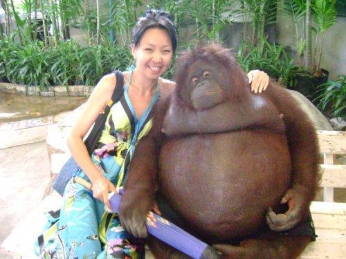 Забавные обезьянки (20 фото)