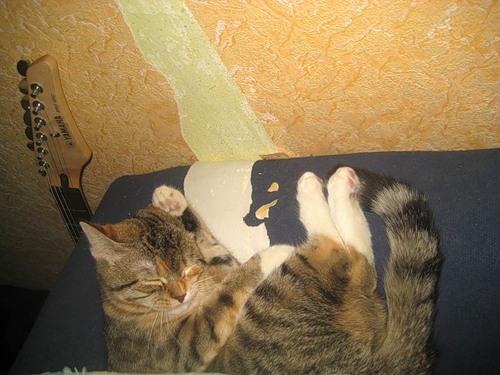 Спят усталые зверюшки (27 фото)