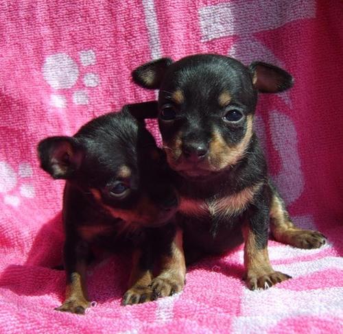 Милые щеночки (30 фото)