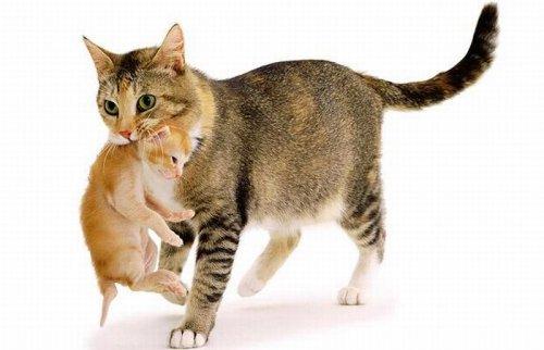 Из кошачьей жизни (12 фото)