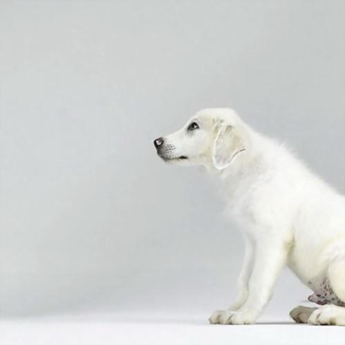 Очаровательные собачатки (29 фото)