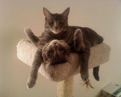 Кошачьи рекорды
