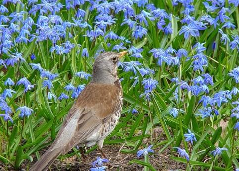 Подборка красивых фото птиц (28 фото)