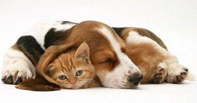 Это интересно: О кошках и собаках