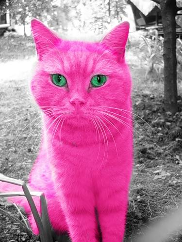 Розовый цвет нам идёт? (19 фото)
