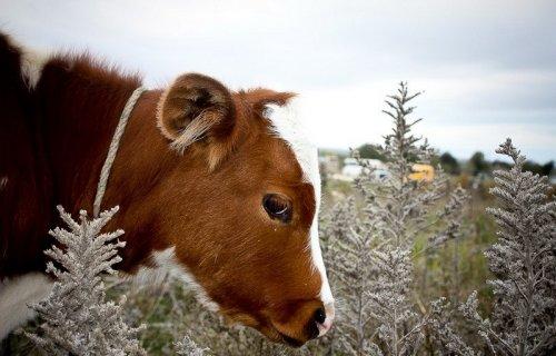 Животный мир (45 фото)