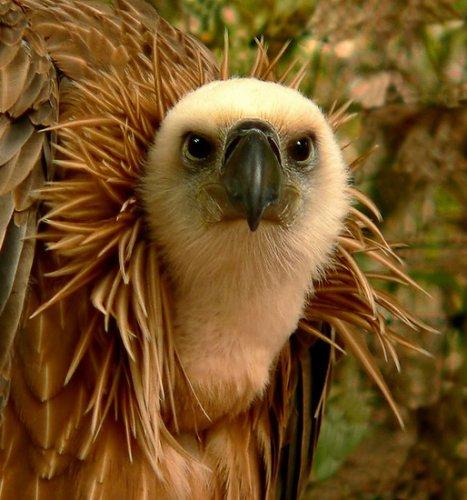 Большие величественные птицы (39 фото)