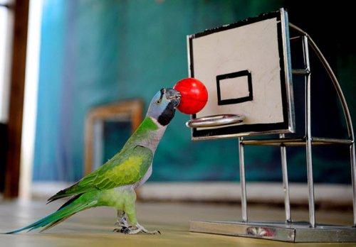 Птичья Олимпиада (13 фото)