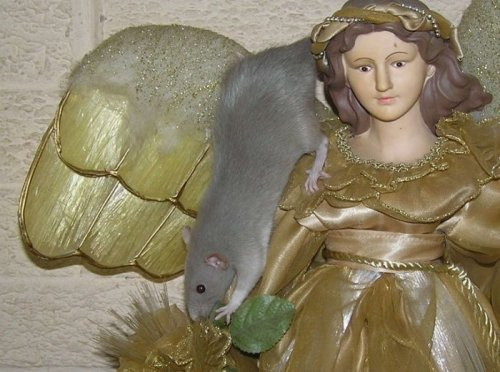 Прикольный крыс (9 фото)