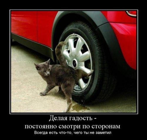 Демотиваторы про животных (23 фото)