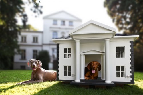 Фазенда для собак (7 фото)