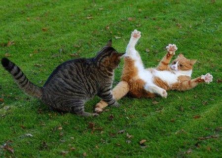 Драка котов (16 фото)