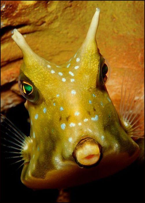 Смешные рыбы фото, днем рождения