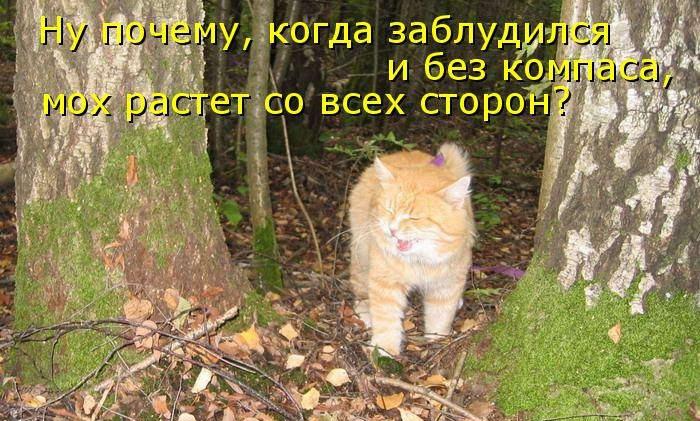 Смешные картинки про лесных жителей с надписями