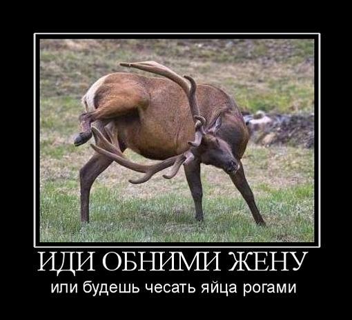 Демотиваторы про животных 24 фото