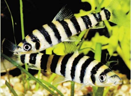 Фотографии Аквариумные рыбки.