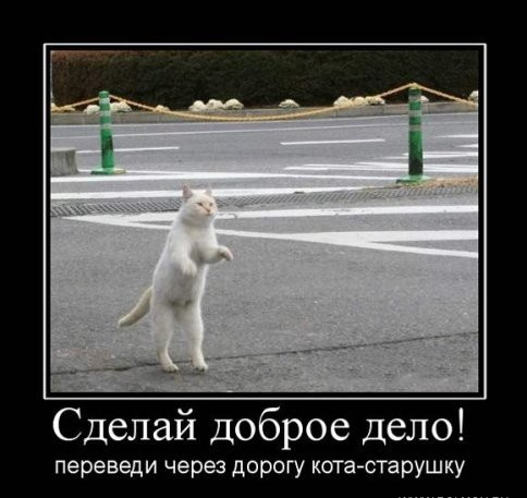 Видео приколы кошки и собаки