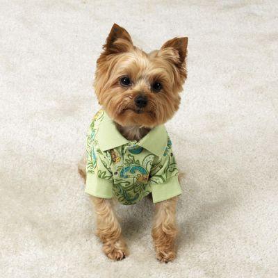 Собаки в гавайских рубашках (21 фото)