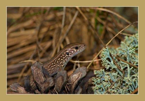 Макросъёмка.Змейки,ящерки,лягушки (44 фото)